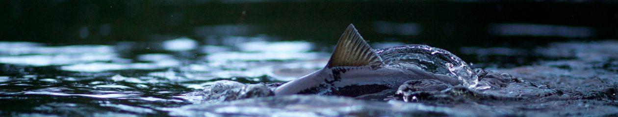 Kinnear Fishing